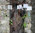 Herbier de printemps du domaine de Saint-Cloud